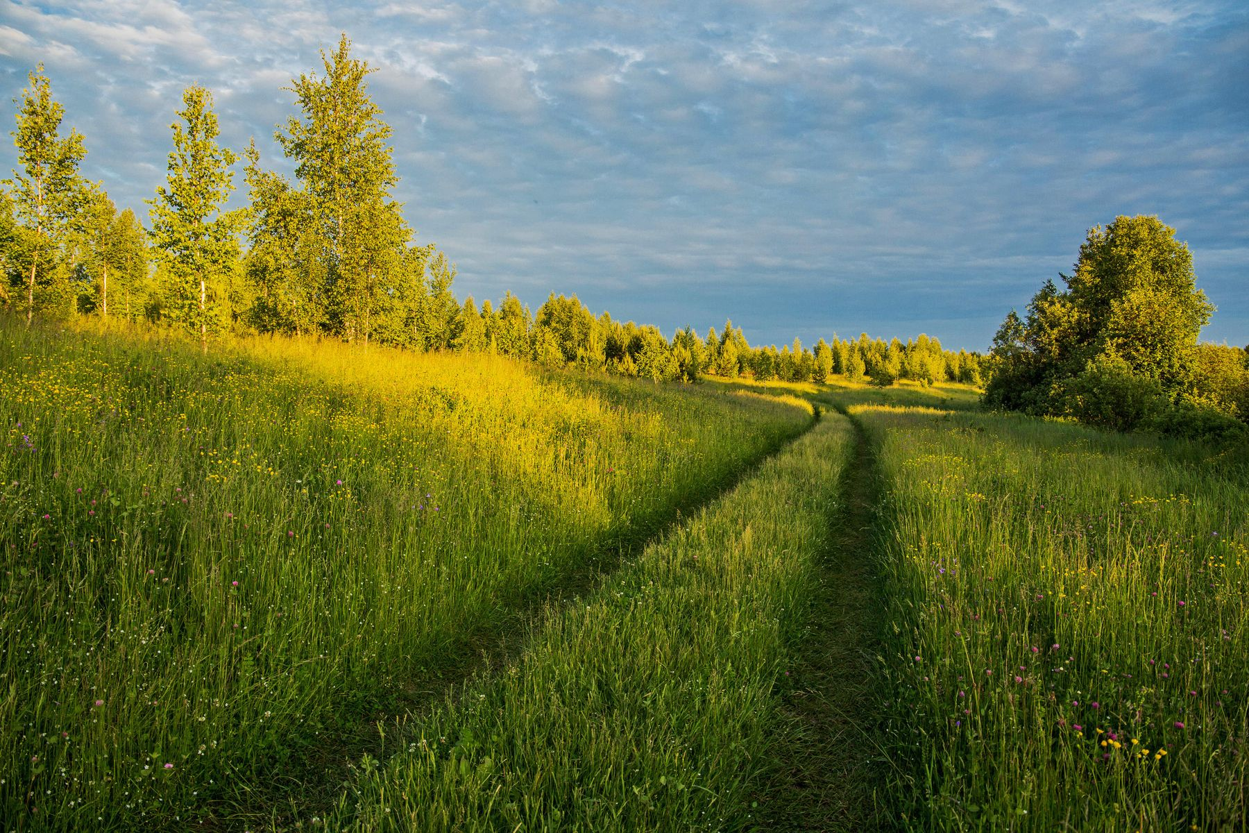 *** природа пейзаж лето вечер дорога