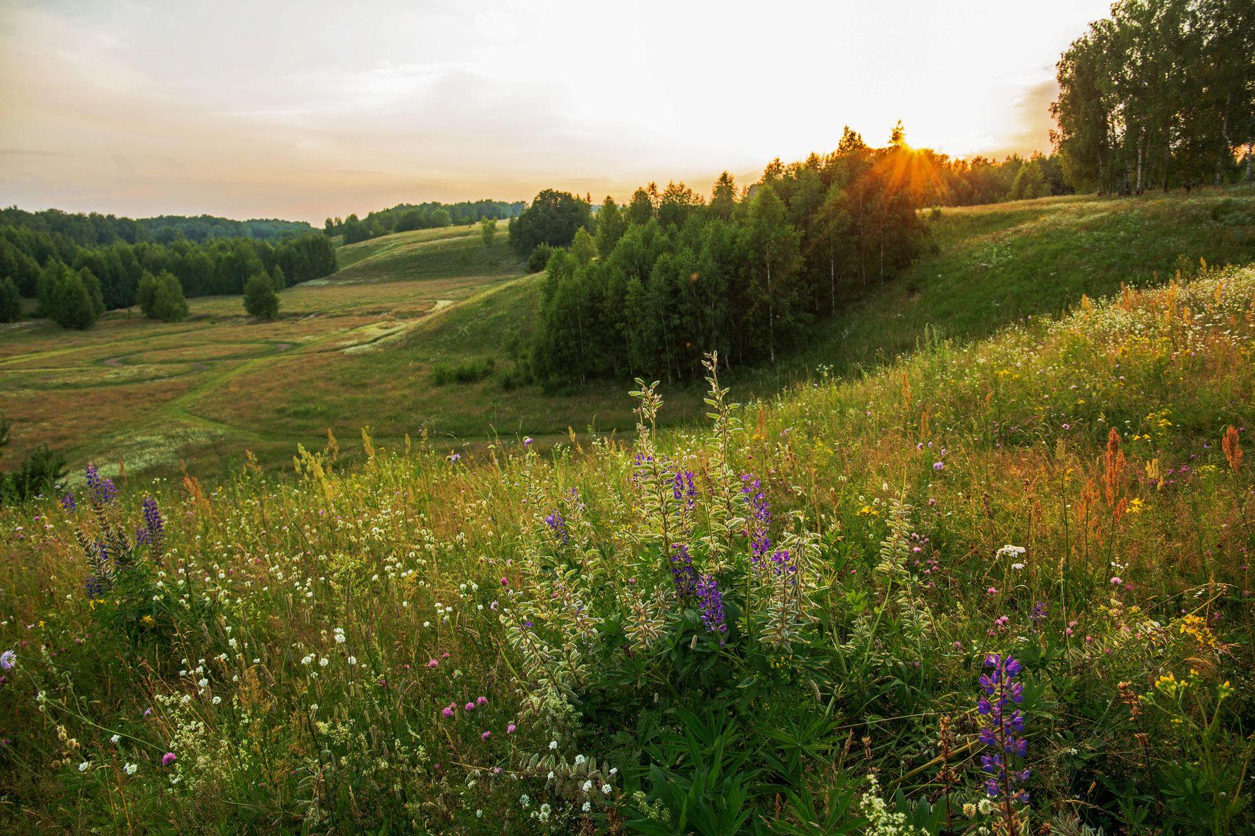 *** природа пейзаж лето вечер закат татарстан новочувашский