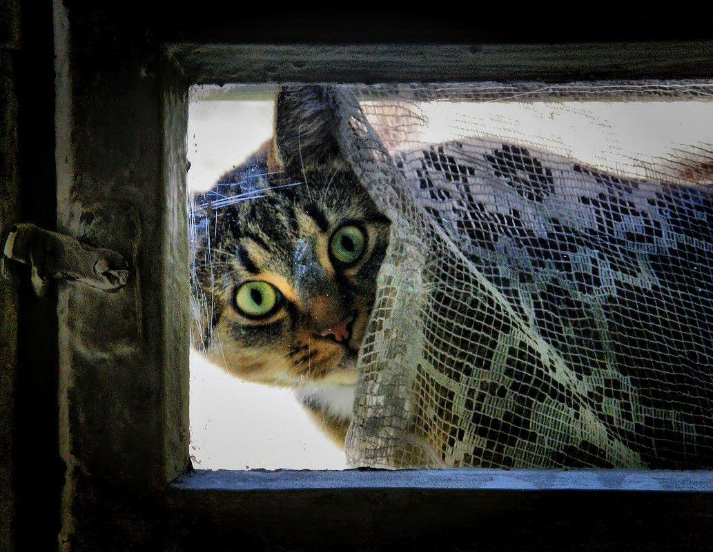 Смотрела кошка в чужое окошко. животные природа фауна