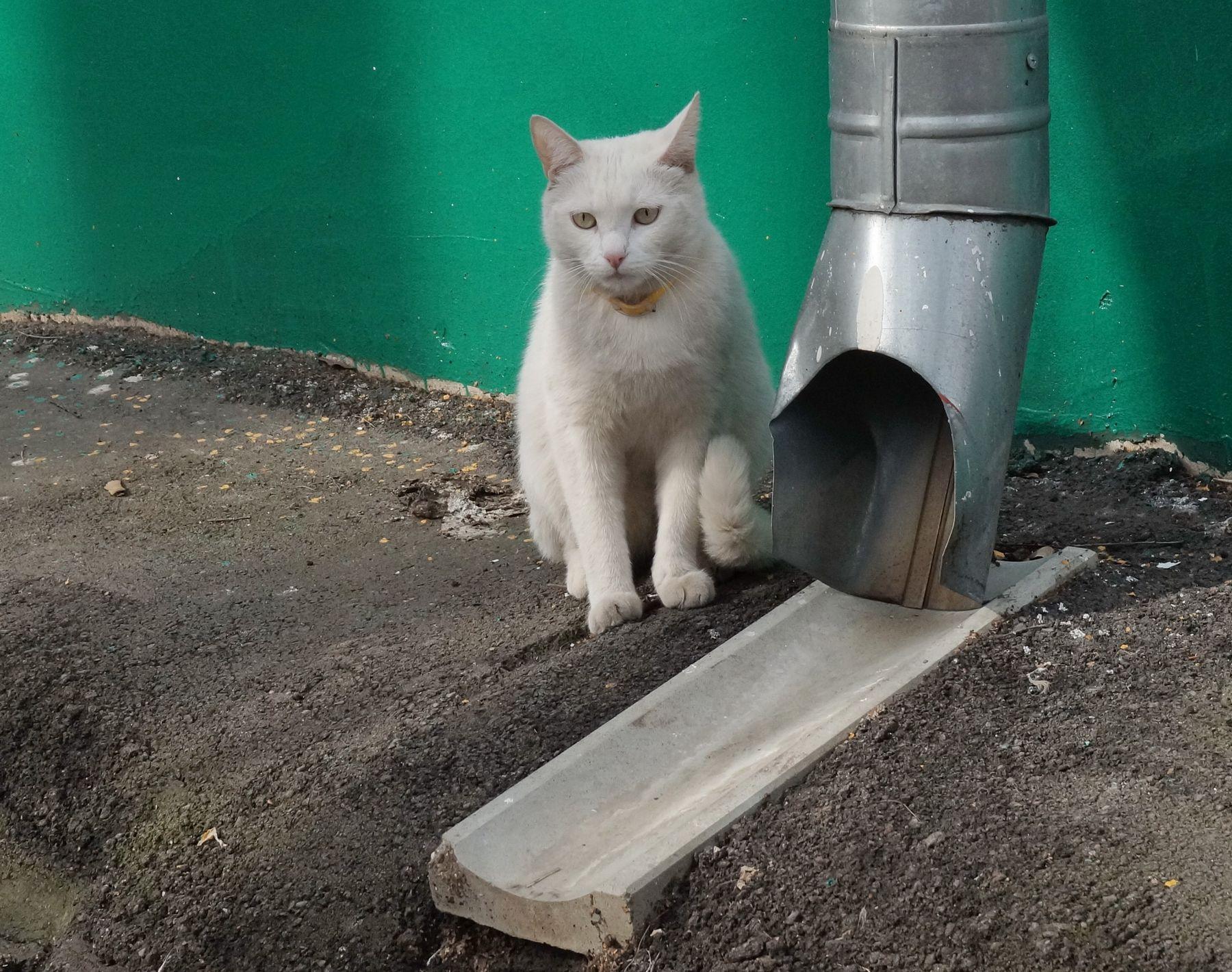 в ожидании кошки