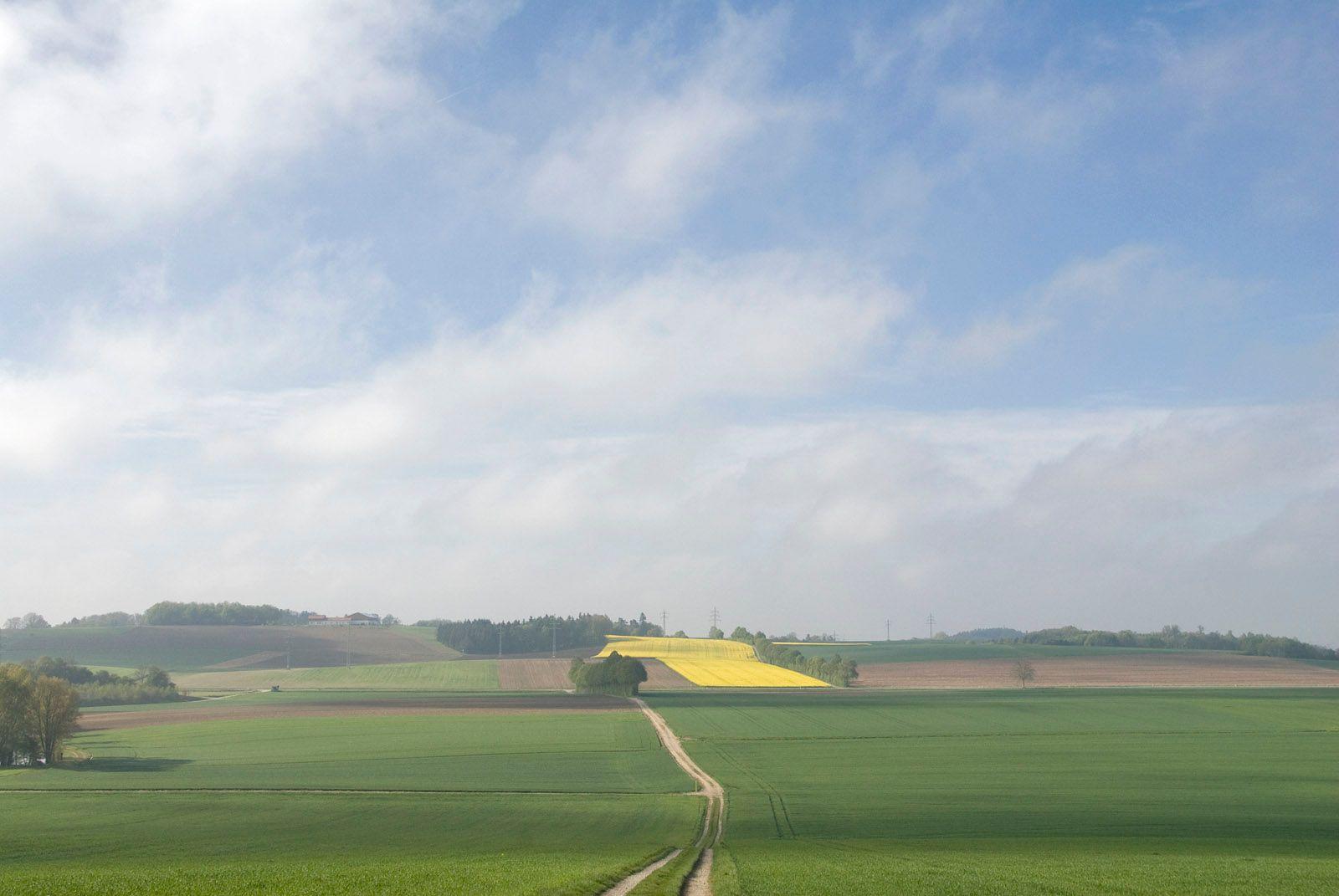 Дорога утро поля дорога