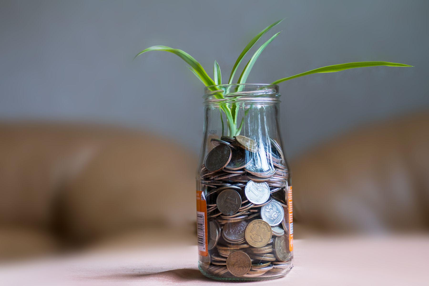 Баночка банка монеты растение