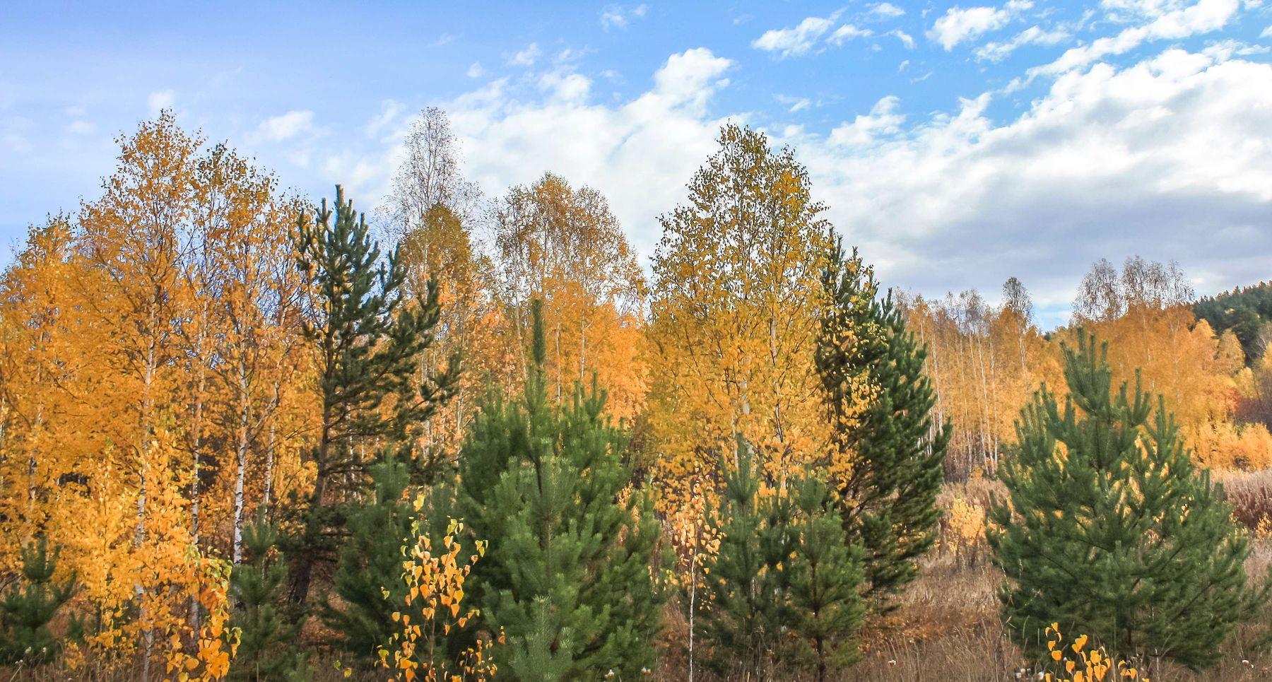 Осенний лес. Южный Урал Миасс Селянкино природа осень