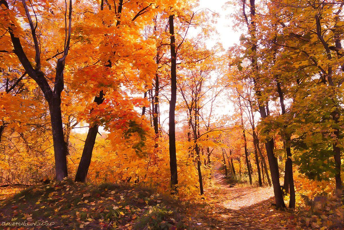 Осень золотая пейзаж осень лес