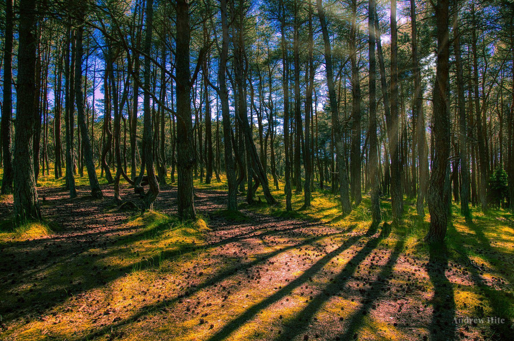 Танцующий Лес, Калининград лес hdr