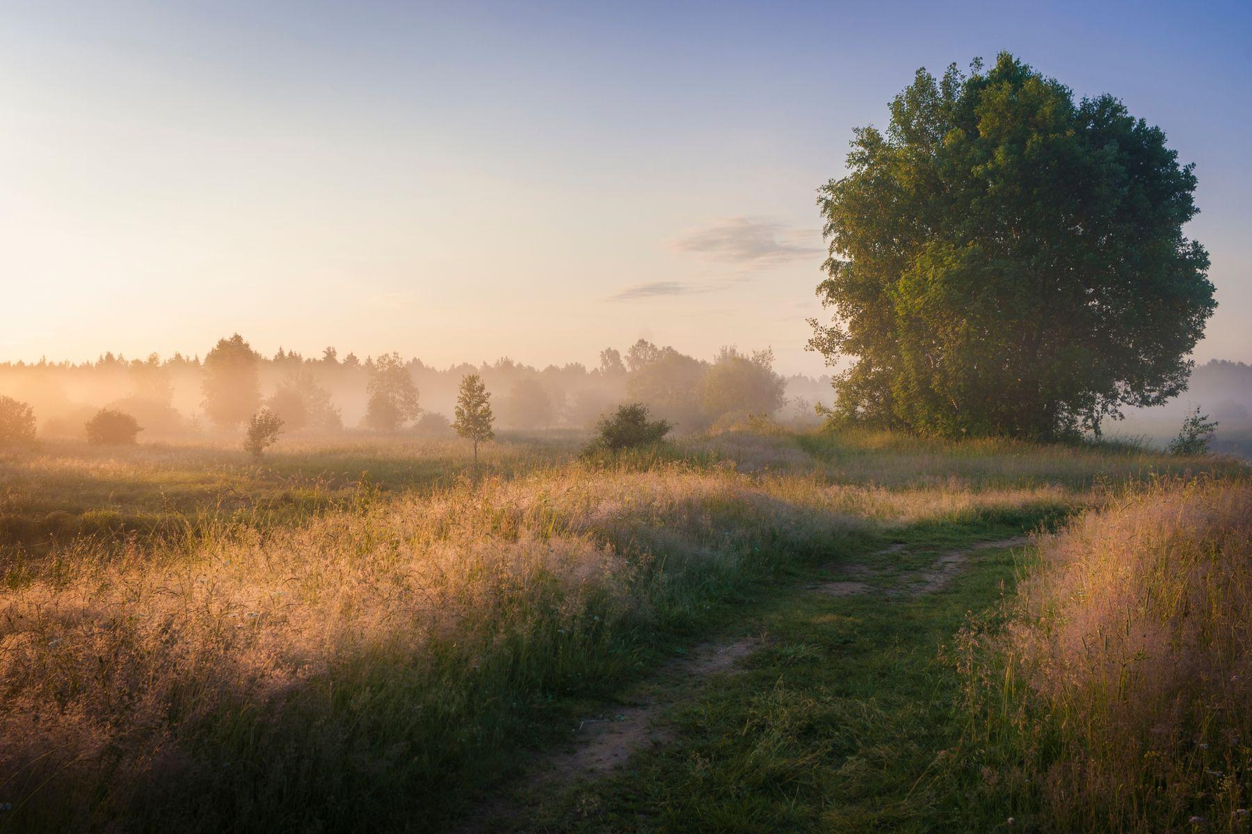 Теплое летнее утро рассвет пейзаж туман утро лето