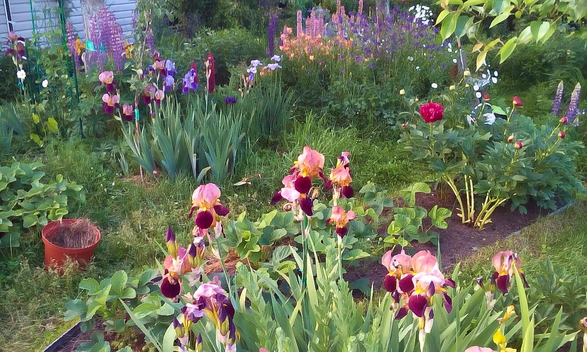 Ассорти сад цветы
