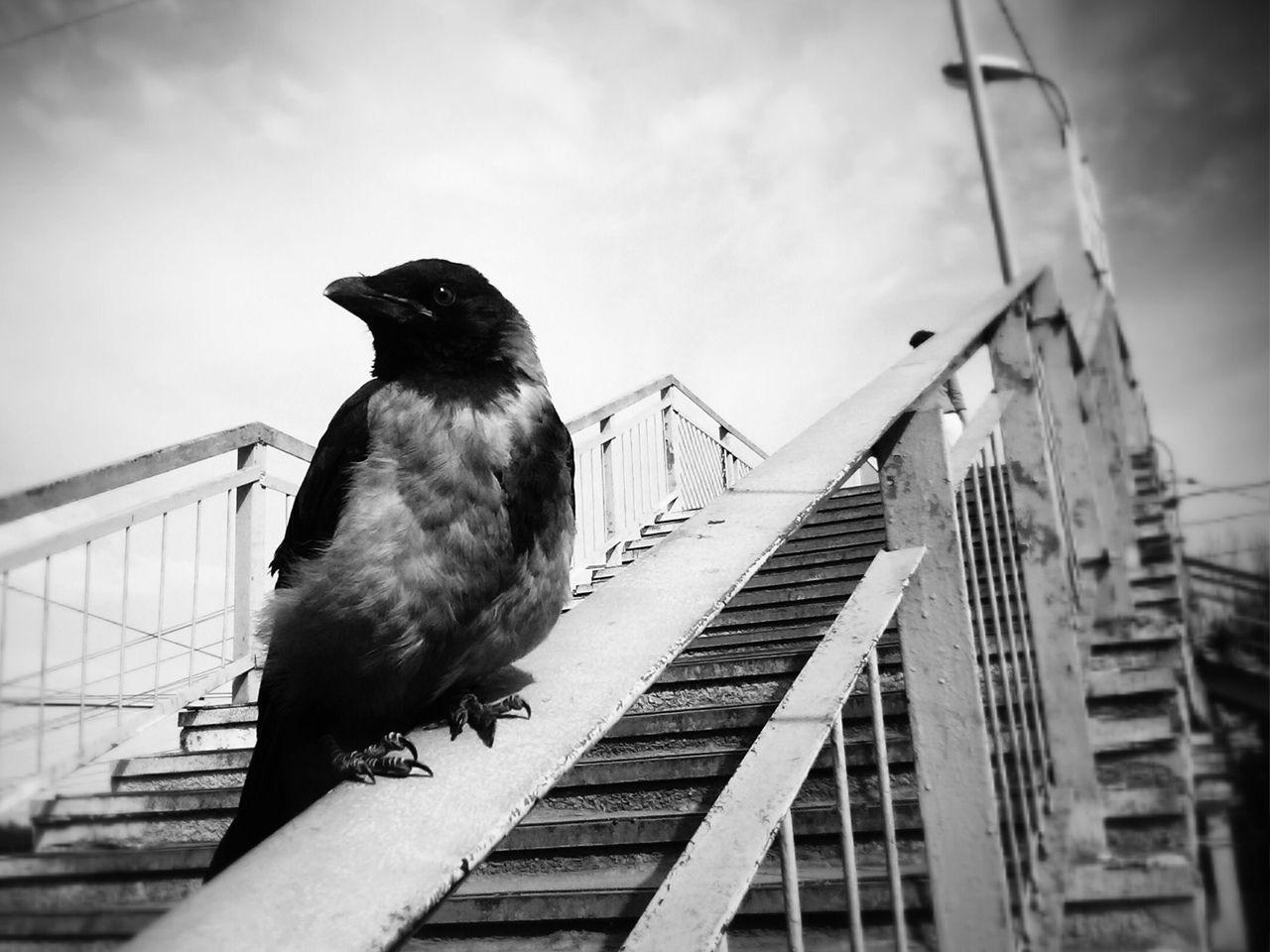 *** город ворона