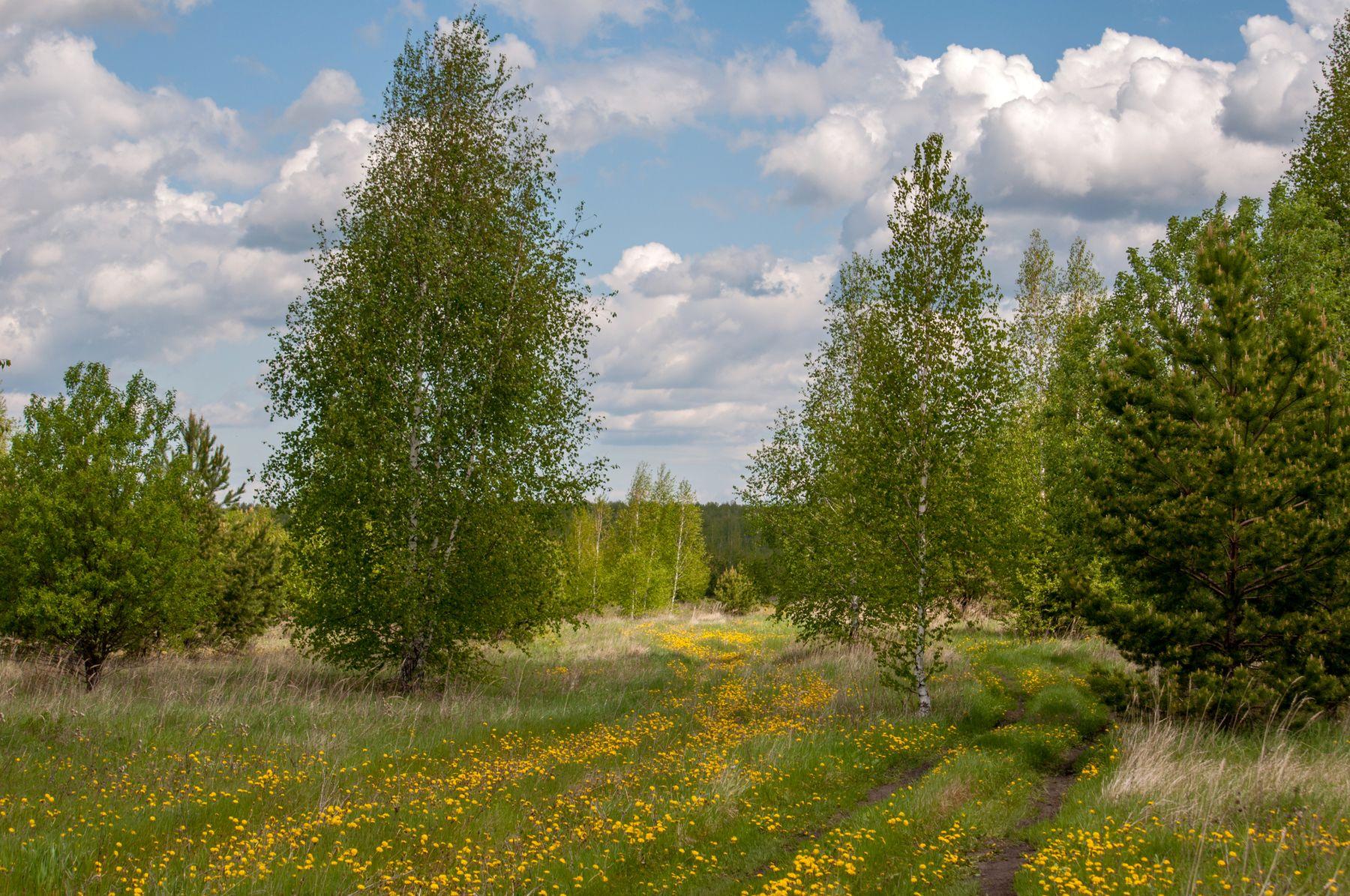 Одуванчиковый лес