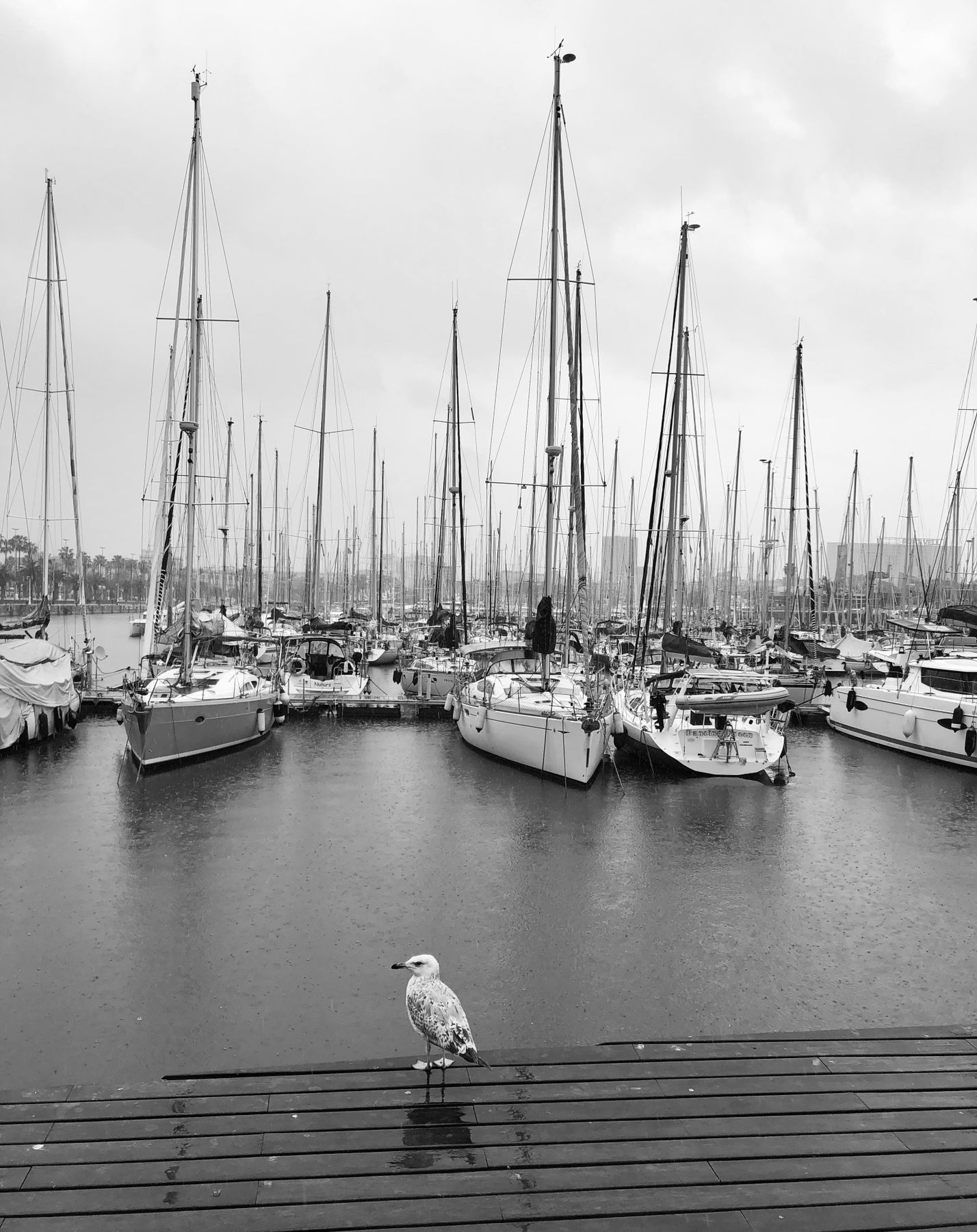 .rainy. barcelona seagull yachts