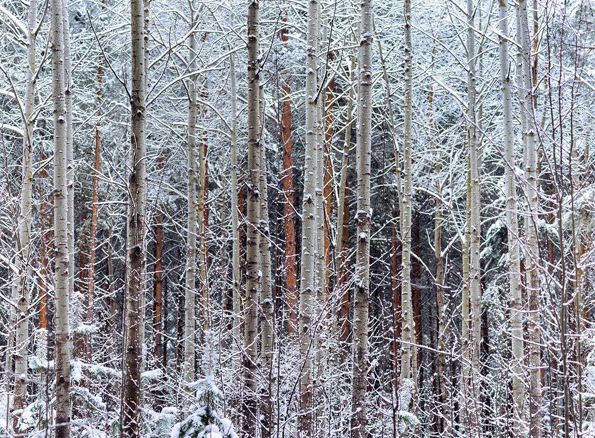 мороз / январь