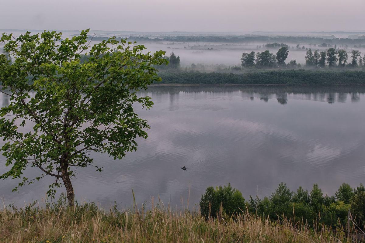 Водяное покрывало с неба сыростью упало река лес природа туман утро