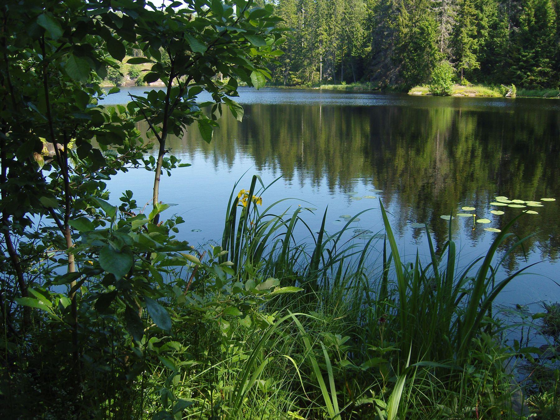 Лесное озеро. Валаам
