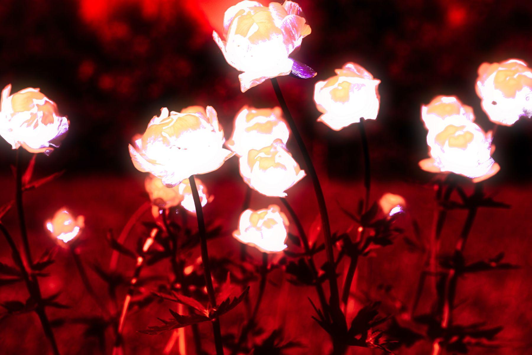 Цветы. Красный вариант