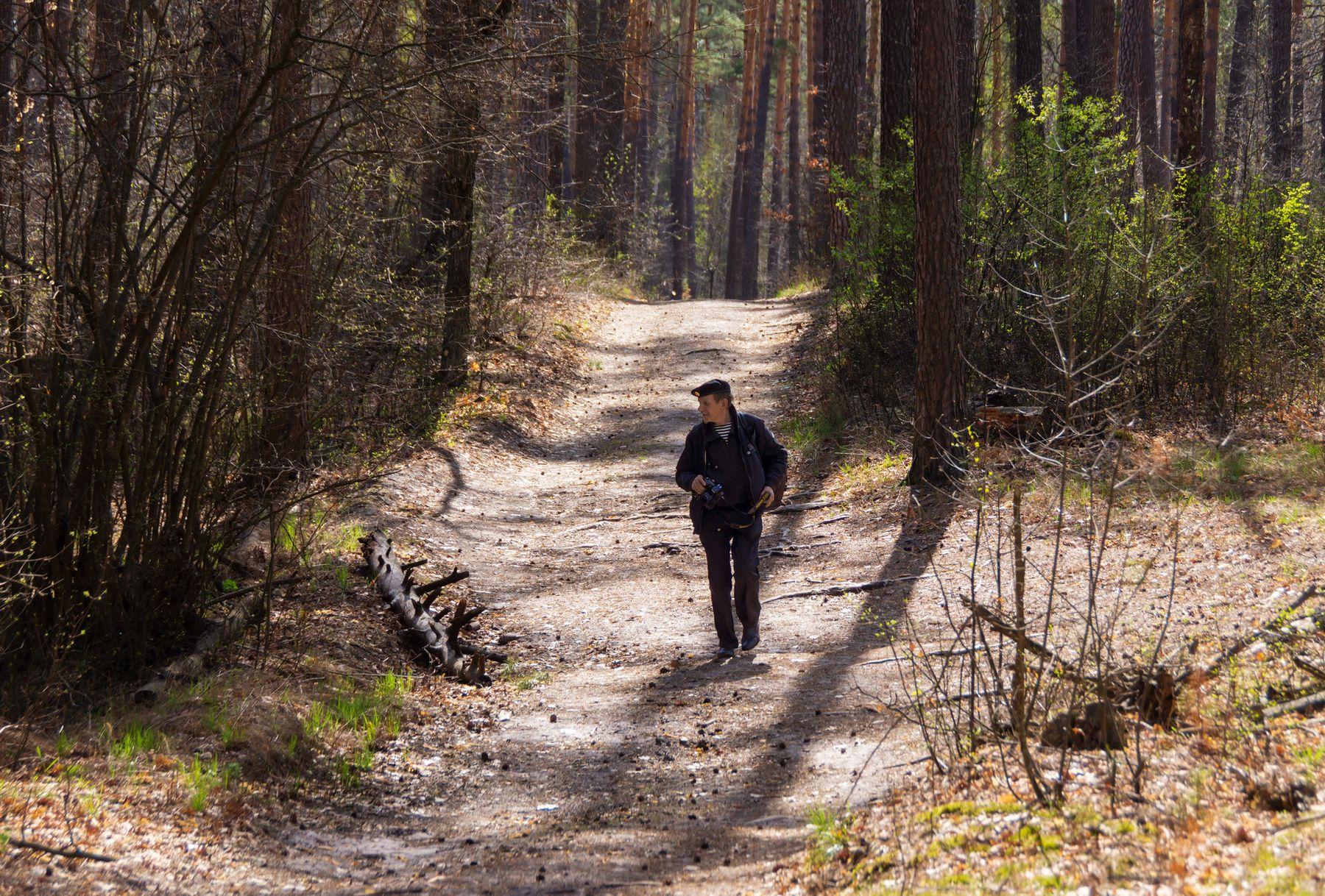 В поисках прекрасного природа весна день ясно лес сосны солнце Маклок пригород Воронеж дорога портрет
