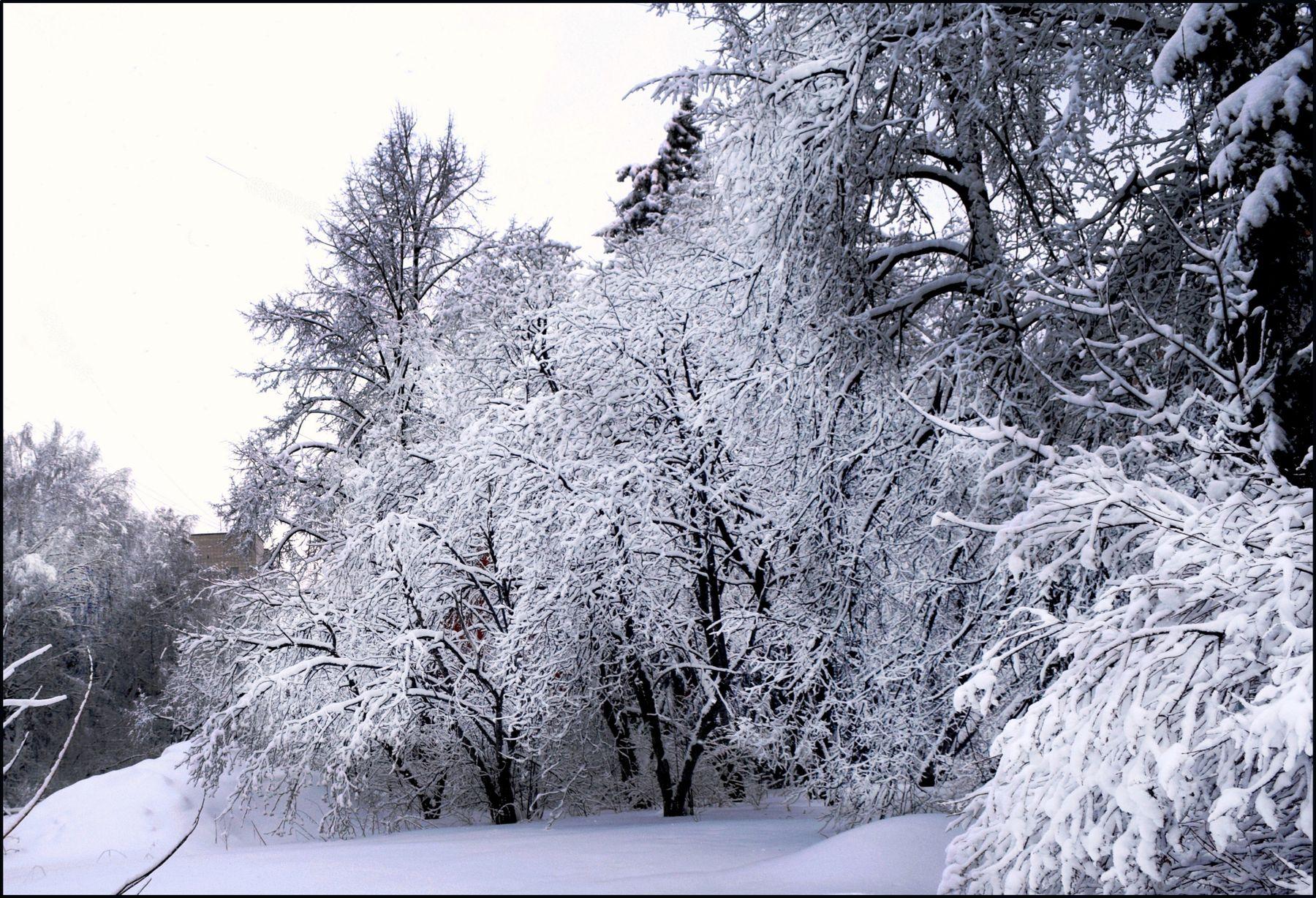 Зима. зимний пейзаж городской