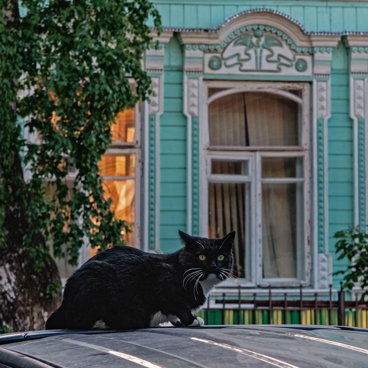 У старого особняка кот особняк окна