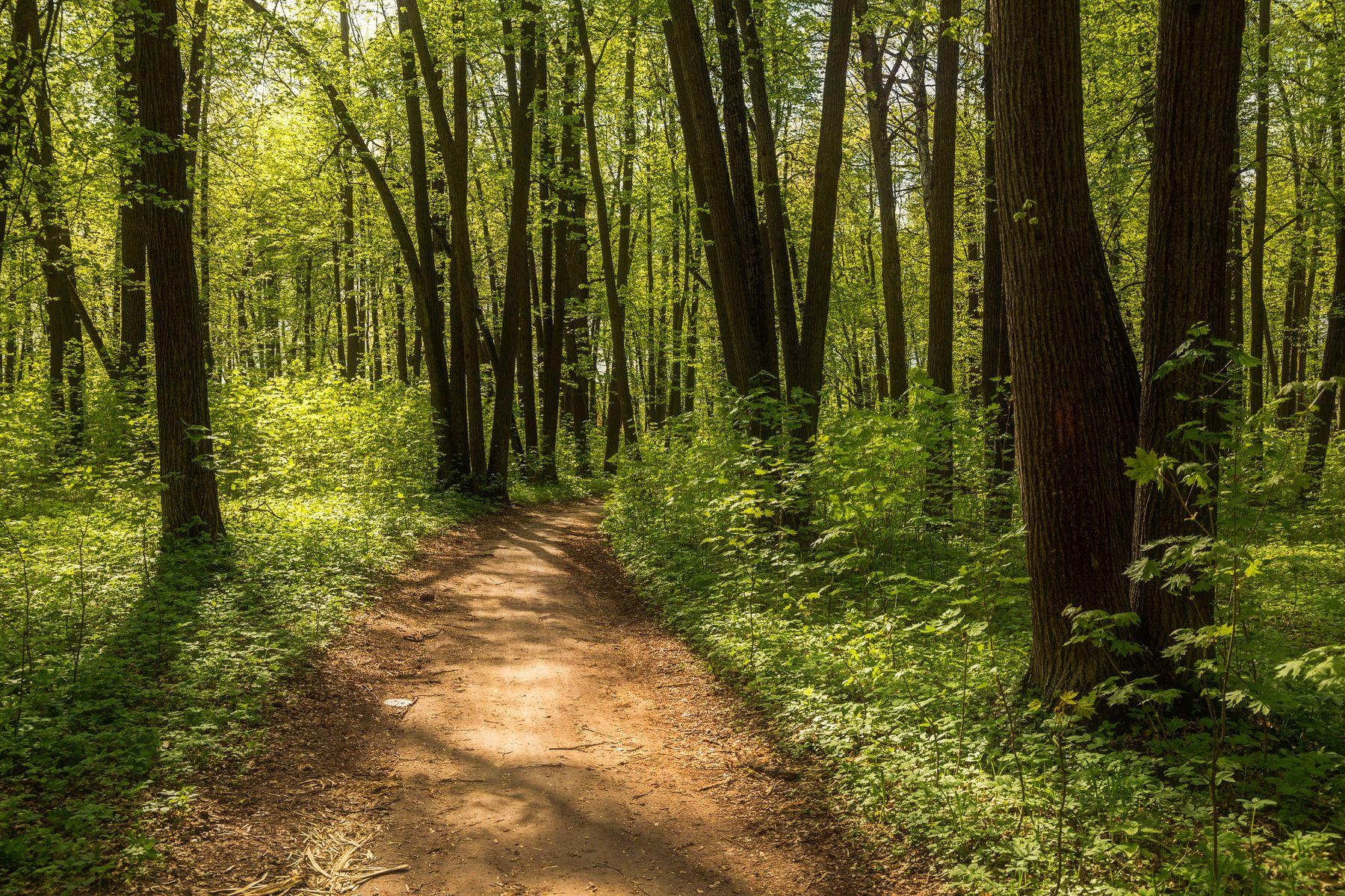 *** природа пейзаж весна лес дорога татарстан октябрьский