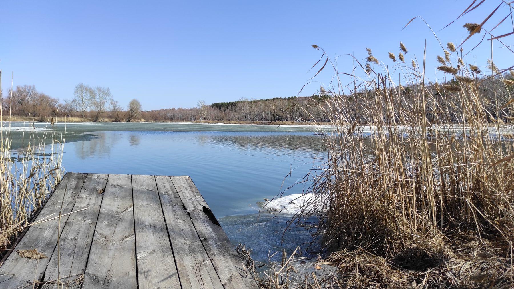*** весна камыши вода мостик