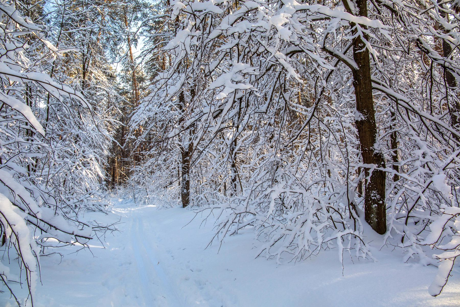 Снежный лес природа пейзаж зима лес татарстан лесопарк лебяжье