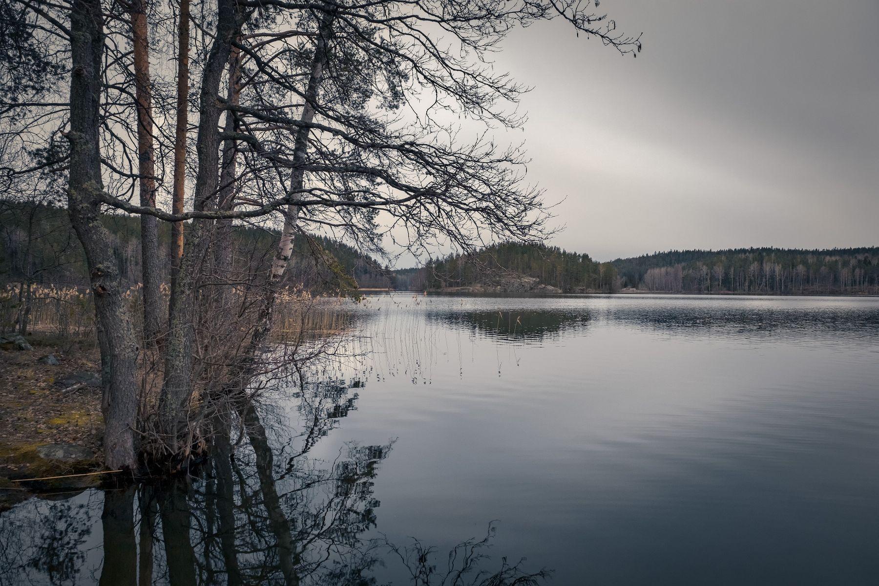 Пасмурный вечер карелия озеро остров кортеланъярви скала сосна лес облака пейзаж природа
