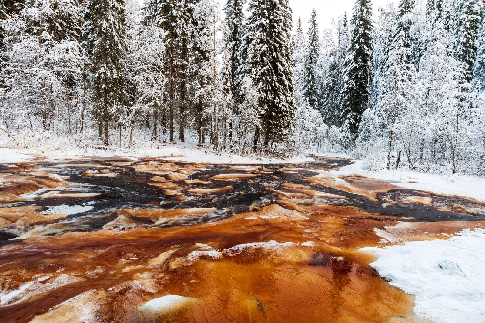 Кровь жизни Карелия Зима Тохмайоки зимой