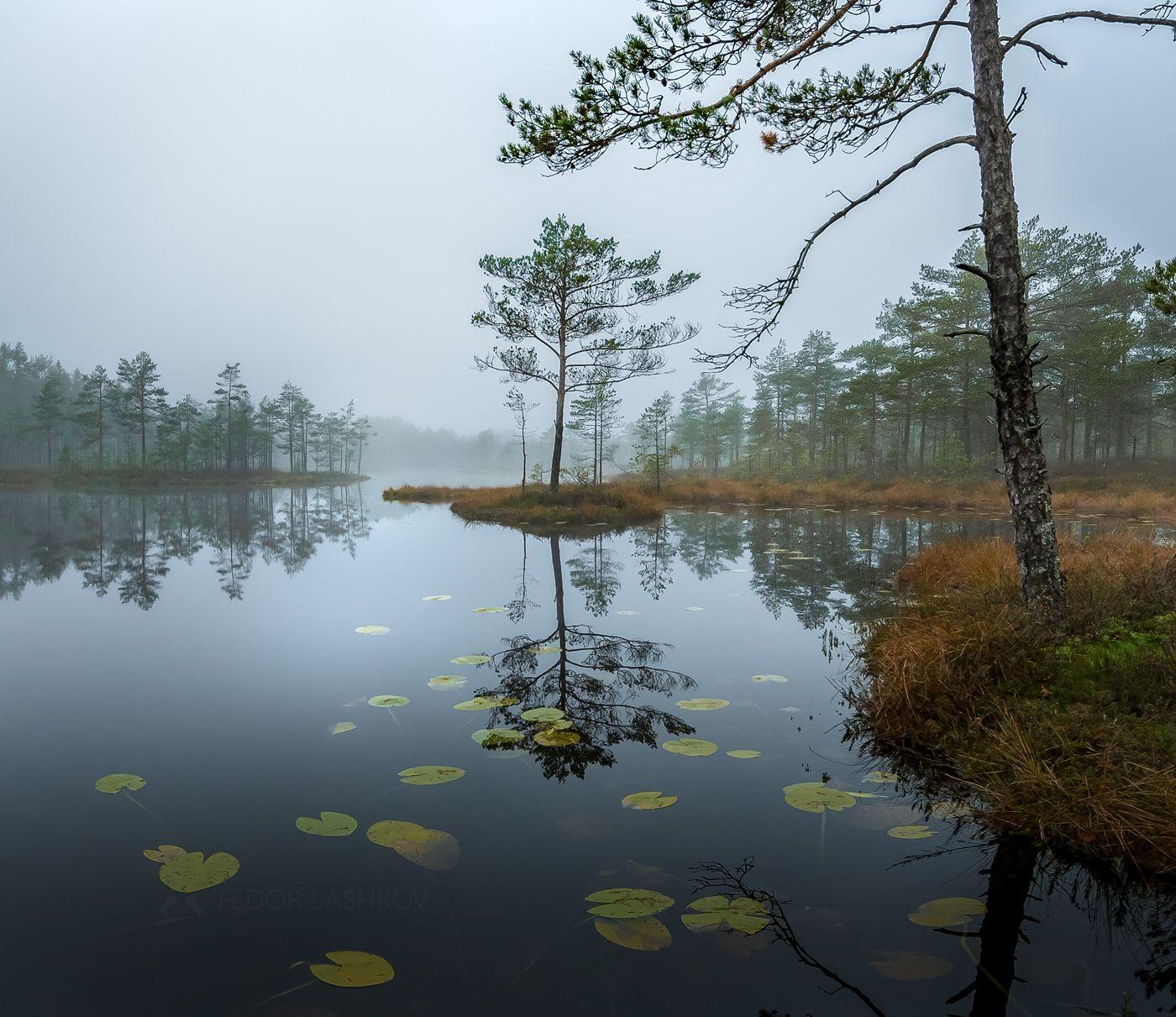 Пасмурное утро Ленинградская область рассвет осень пасмурно сосна озеро туман отражение деревья берег листья кубышка непогода серый стальной