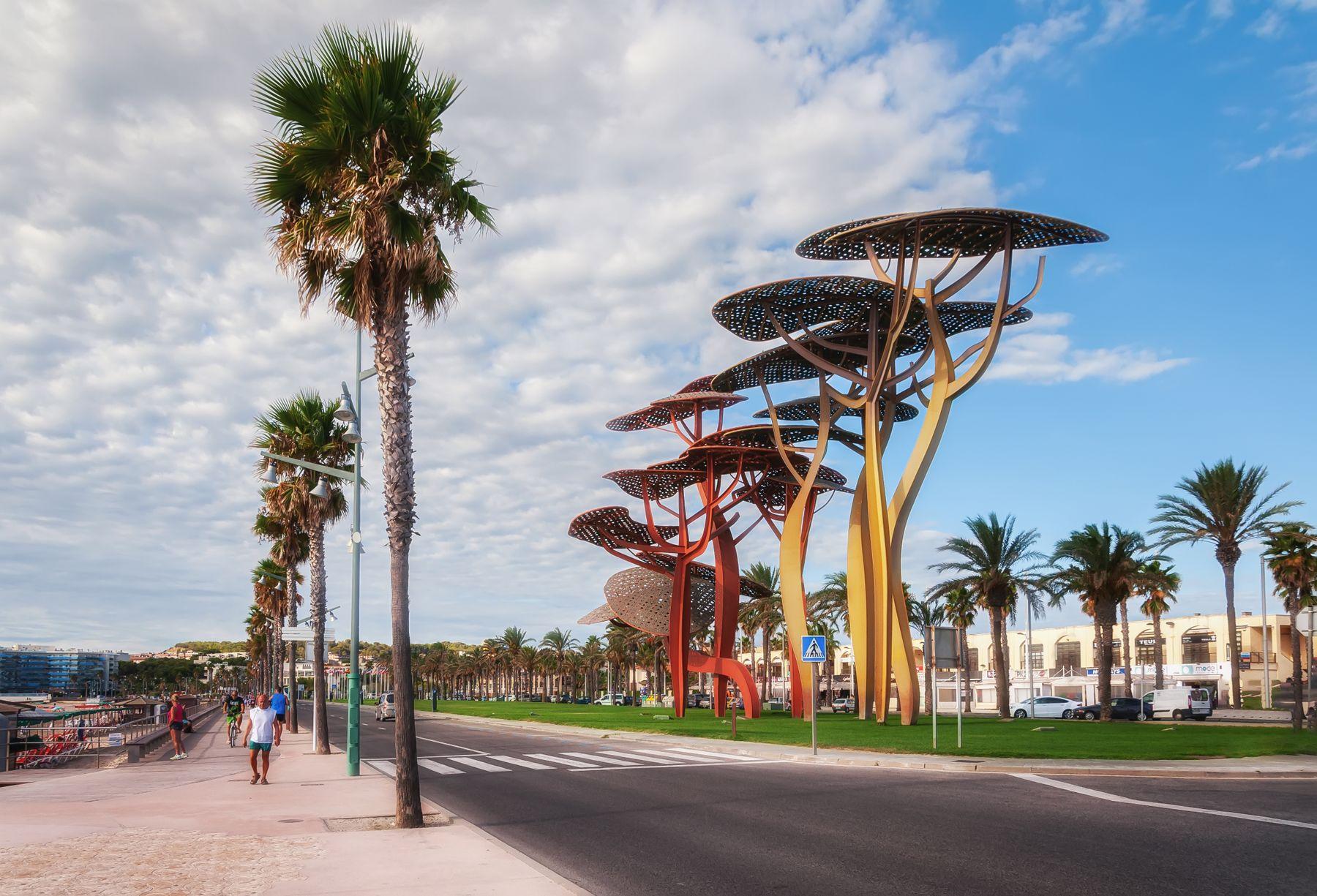 Сосновая роща роща побережье Испания