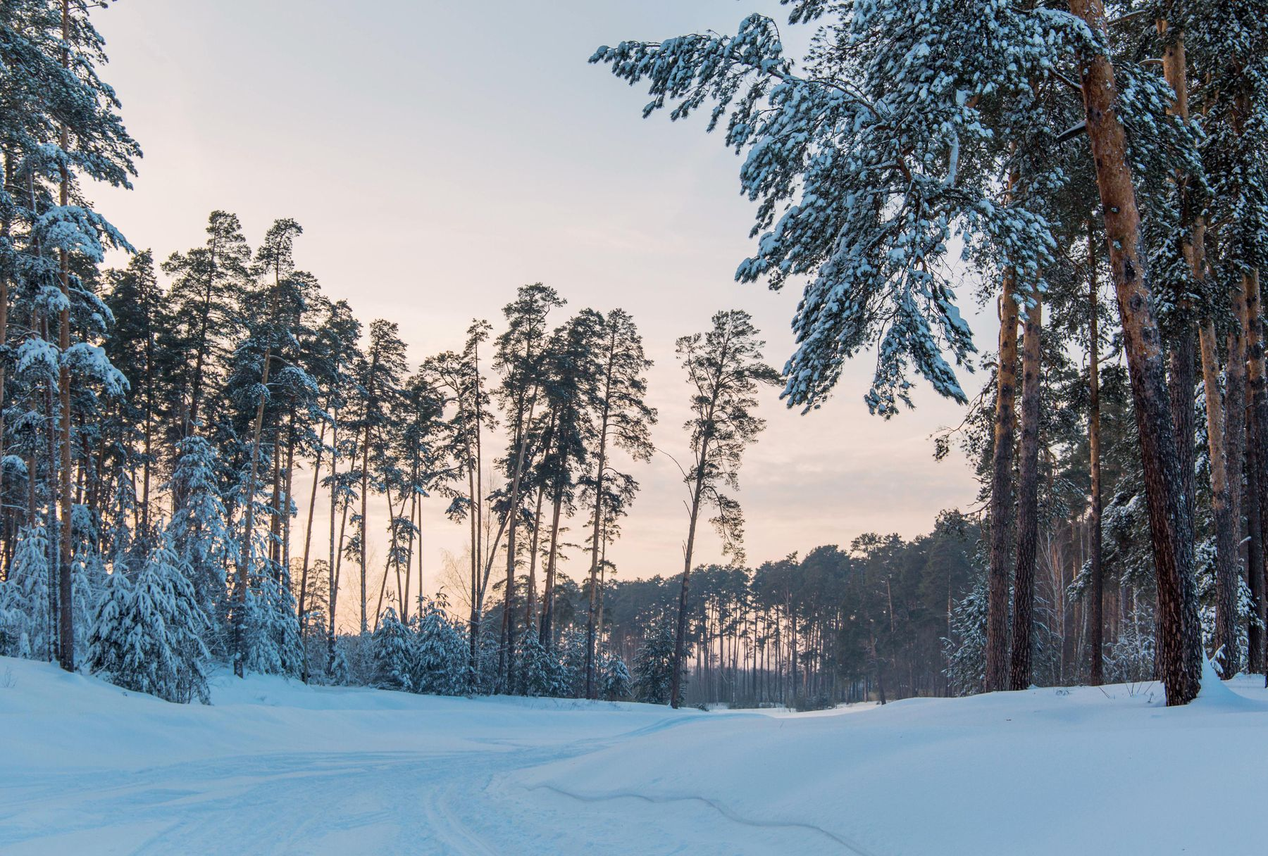 лесопарк Лебяжье природа пейзаж зима вечер татарстан лес лесопарк лебяжье