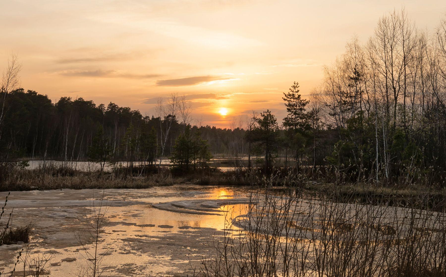 Весна на болотах