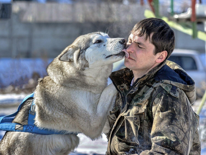 Это чувство неподдельно Любовь собака погонщик зима ретро