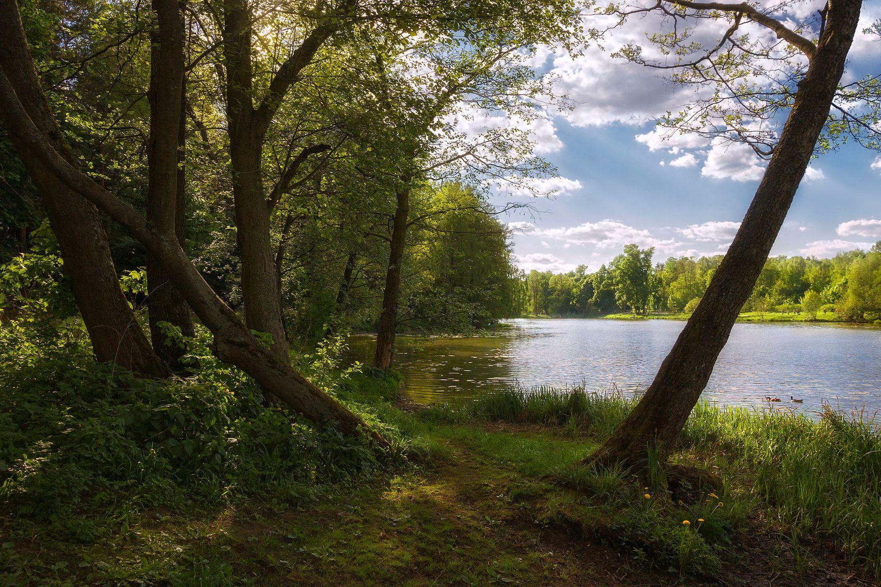 *На озёрном берегу* Тенистый берег озеро солнечно лето