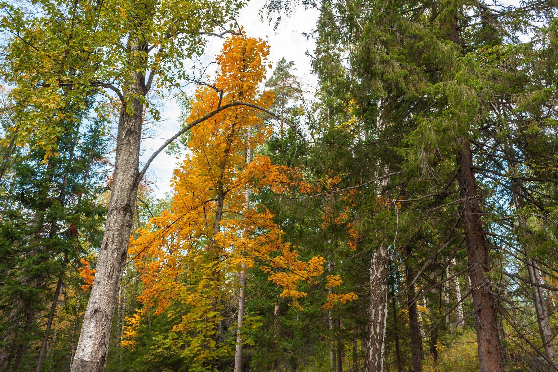 Осенний лес. Южный Урал Миасс природа осень
