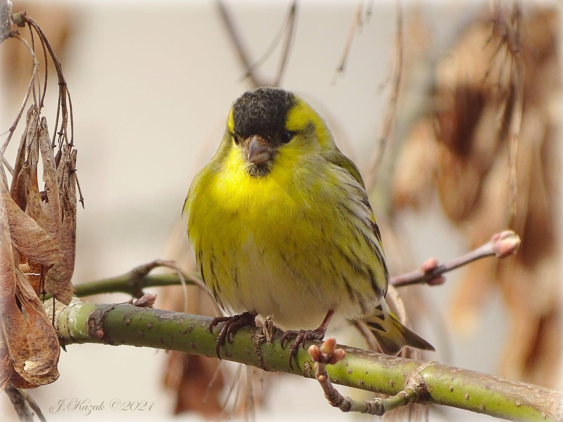 Модельная внешность. животные природа птицы фауна