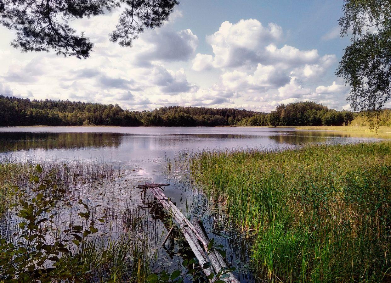 ***Лето на озере.