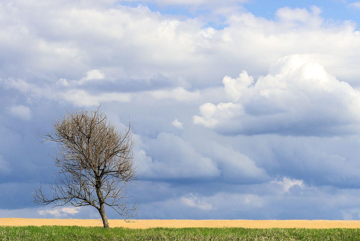 *** Весна дерево поле