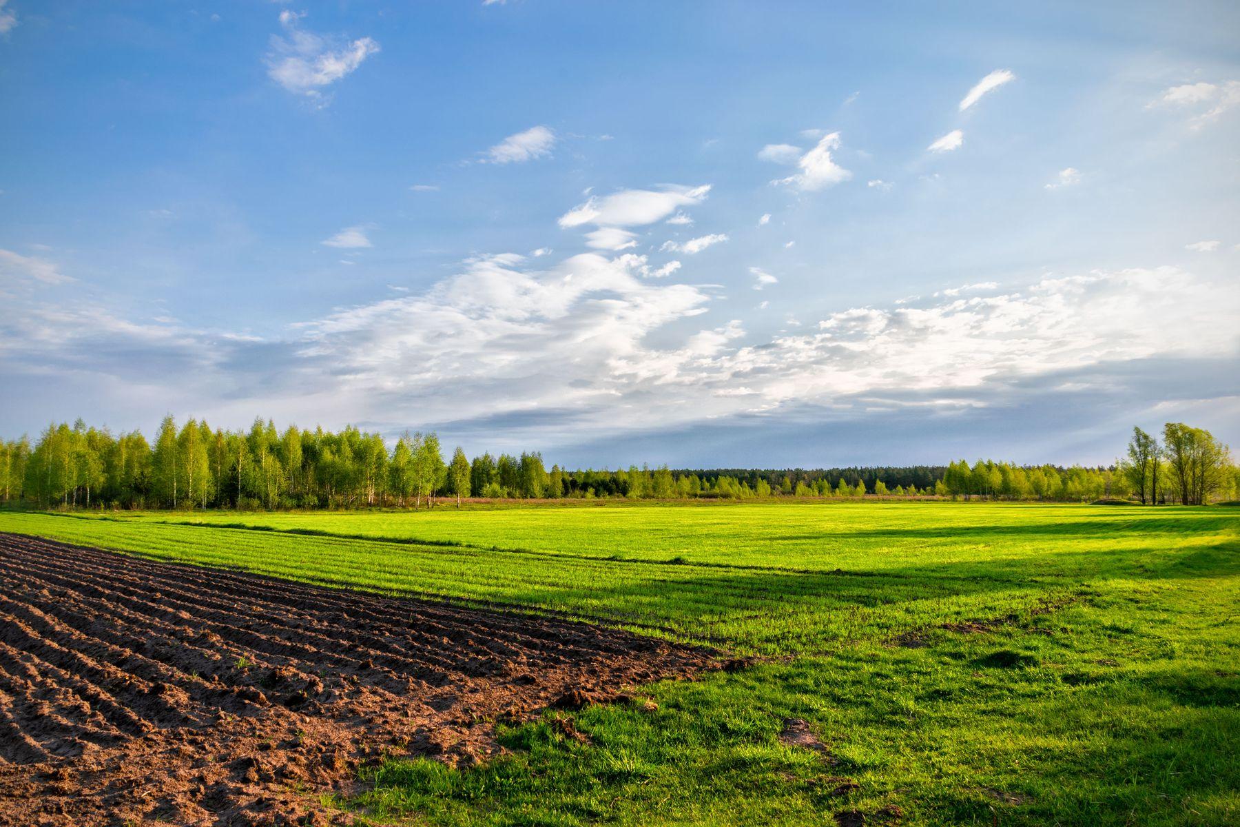 Утро нового дня Утро трава небо вспаханная земля тени