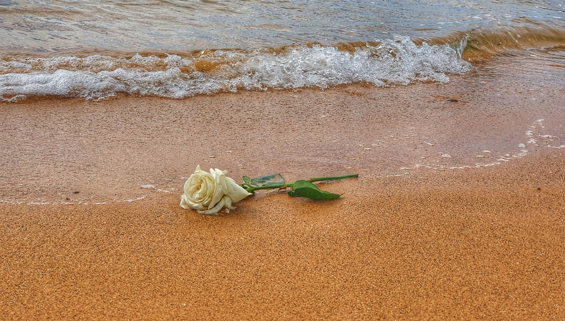 *** океан волна цветок роза
