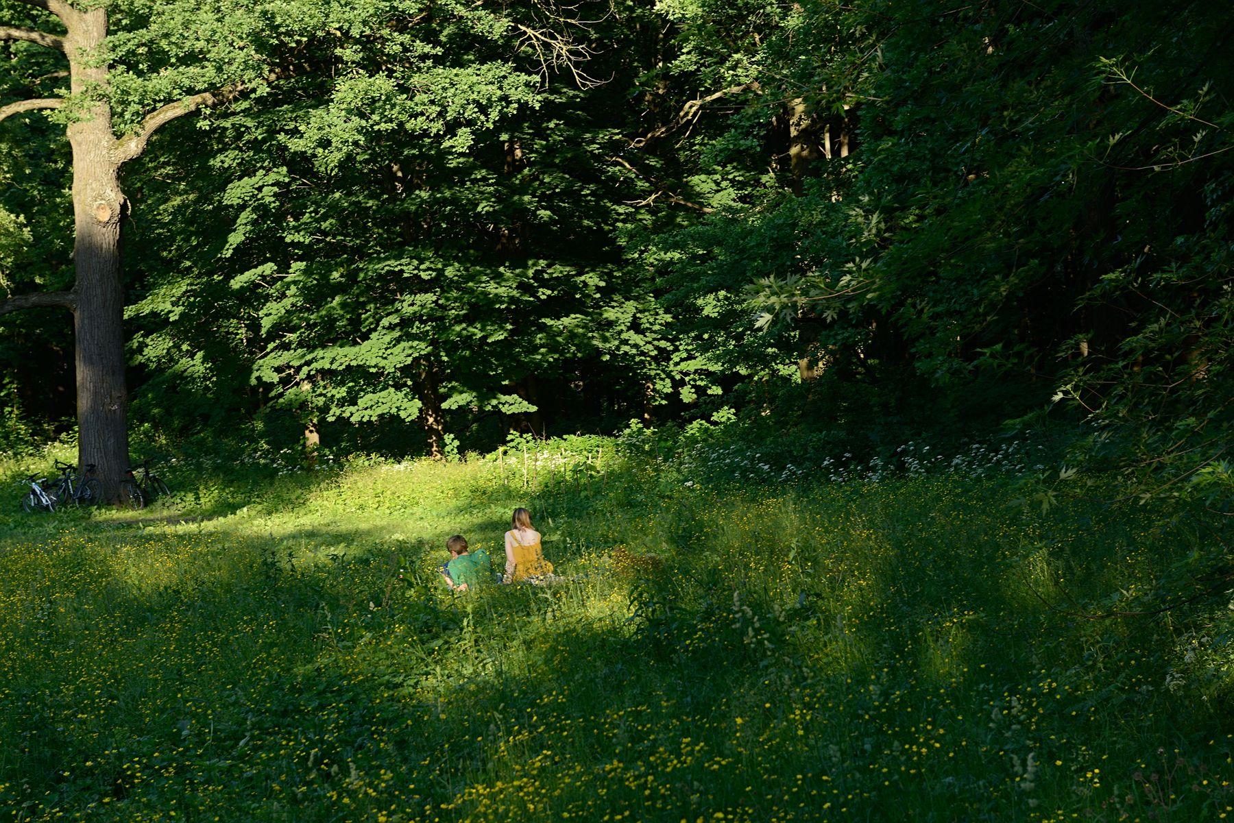 Зелёный рай Россия Москва ботанический сад лето природа