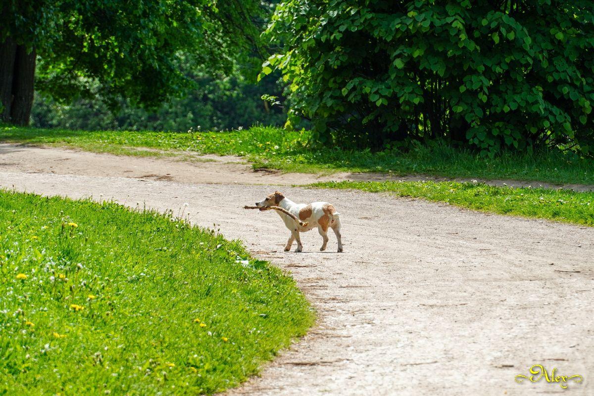 *** пёс животное дорога природа парк