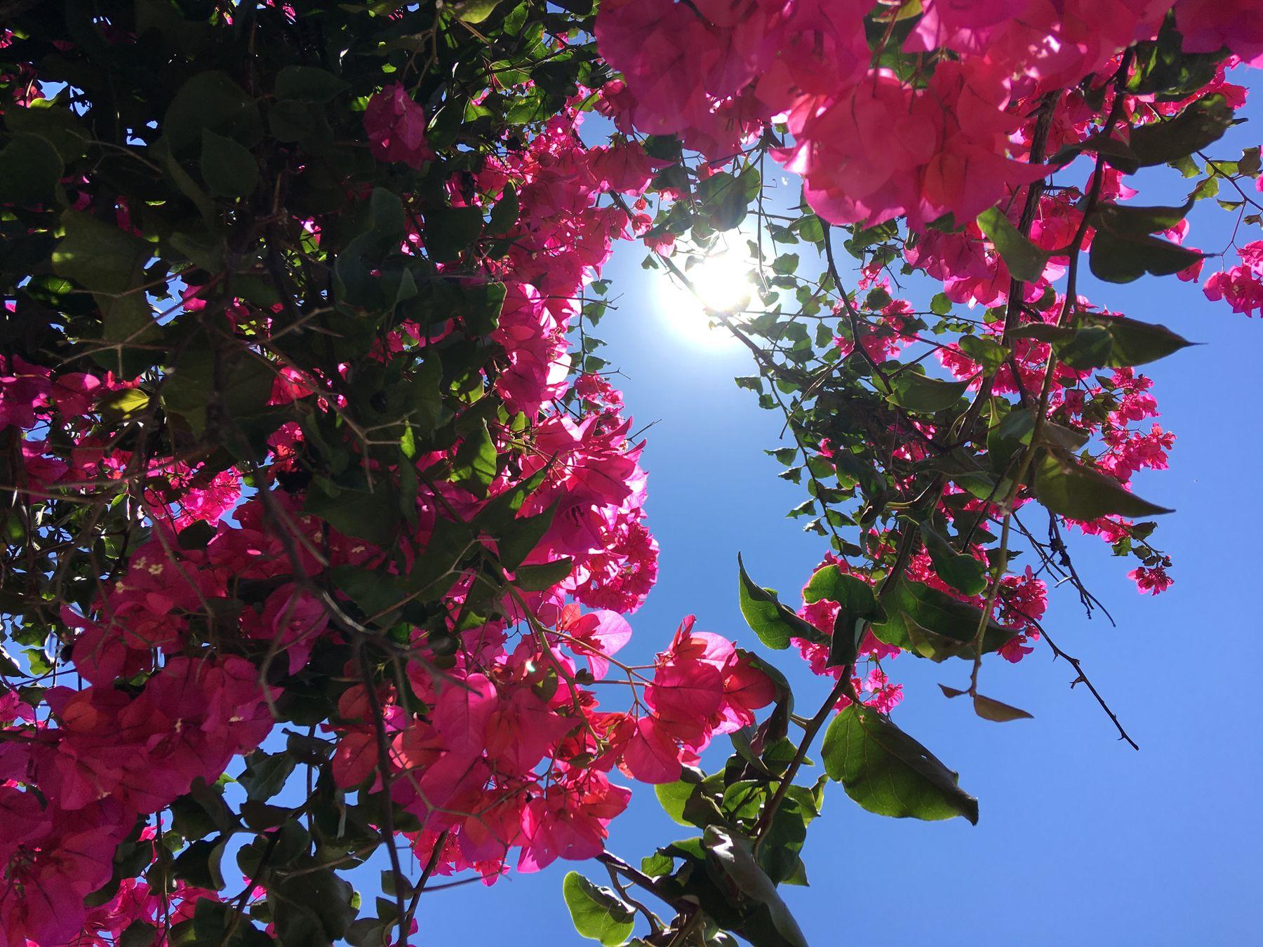 Яркость Мальты цветы