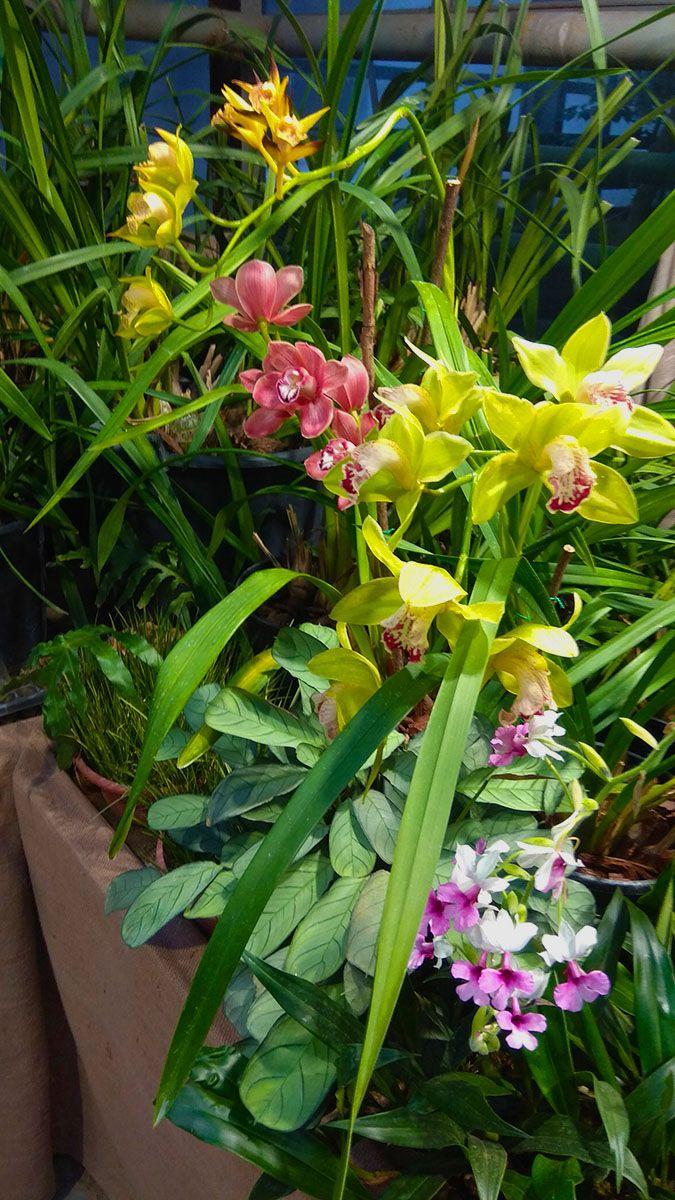 Все краски орхидей орхидеи