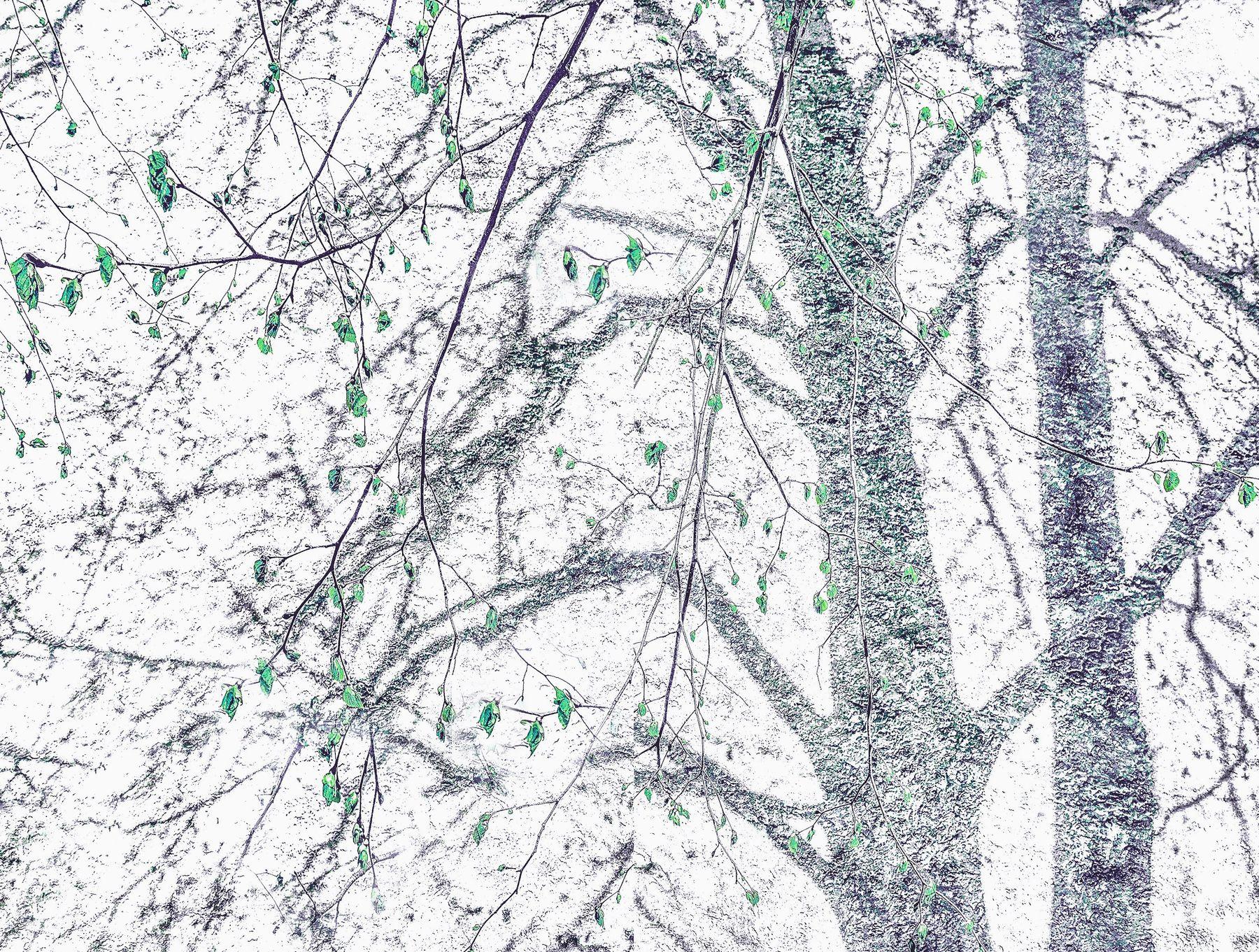 ***Игра свет тень реальность воображение дерево ветки листья весна