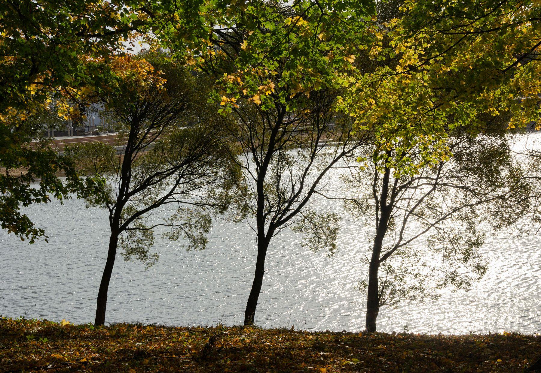 trio богородицк осень октябрь
