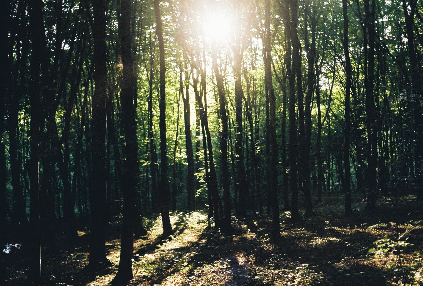 *** солнце лес