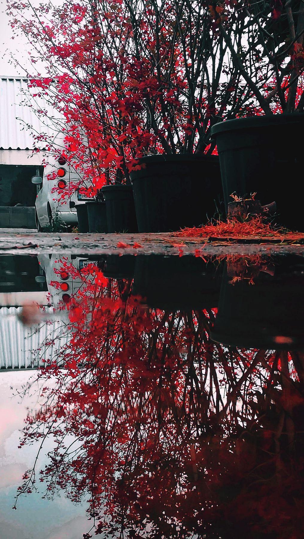 Ланос в листьях сакуры на отшибе токио(нет) ланос улица лужа кусты япония сакура