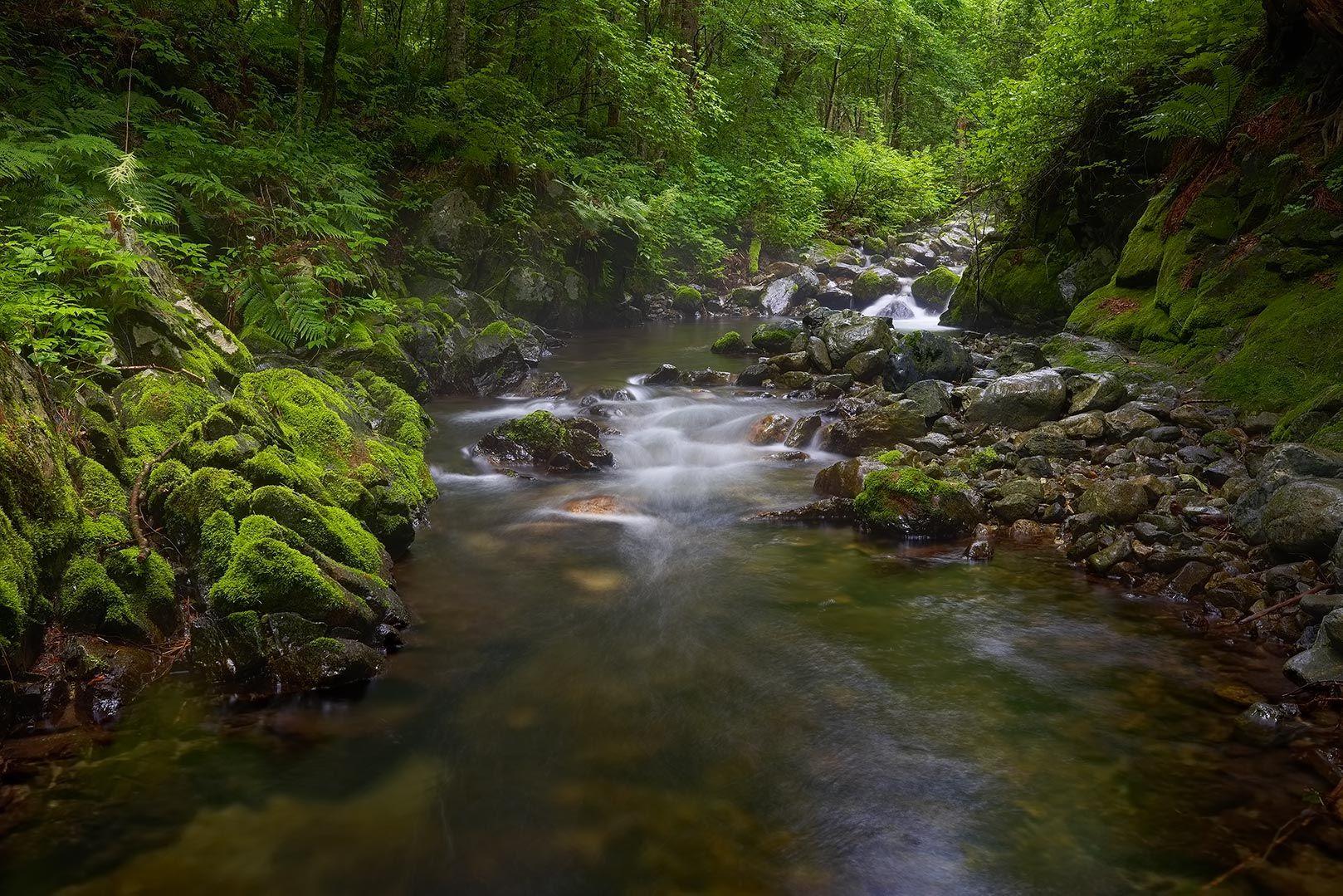 зелёный мох мох Приморье ручей скалы тайга летнее утро