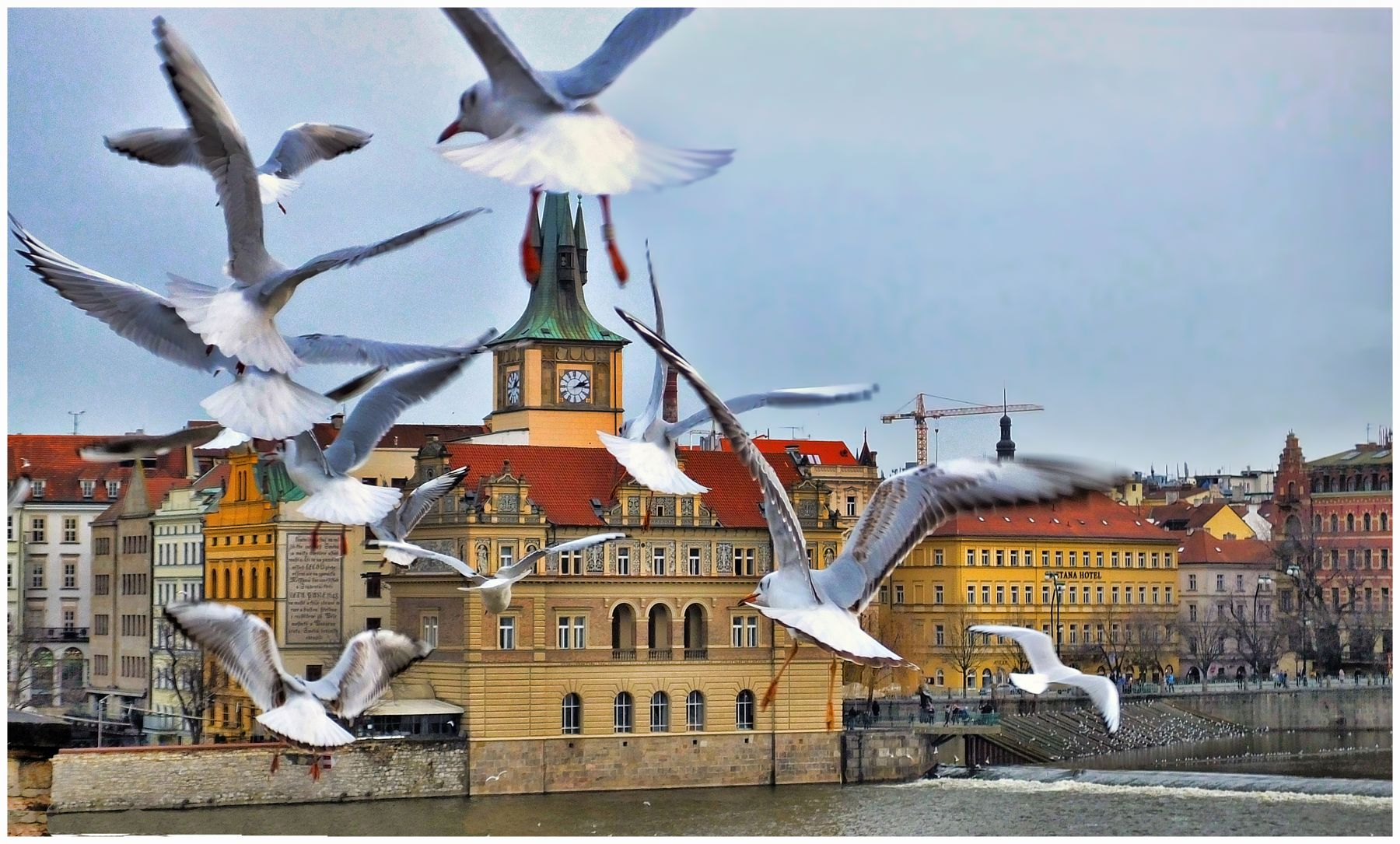 Чайки Карлового моста.Прага.