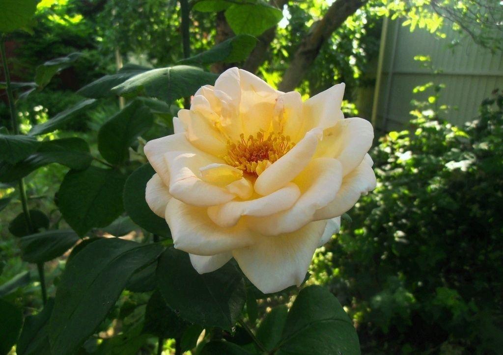 Жаркое утро дома цветы лето