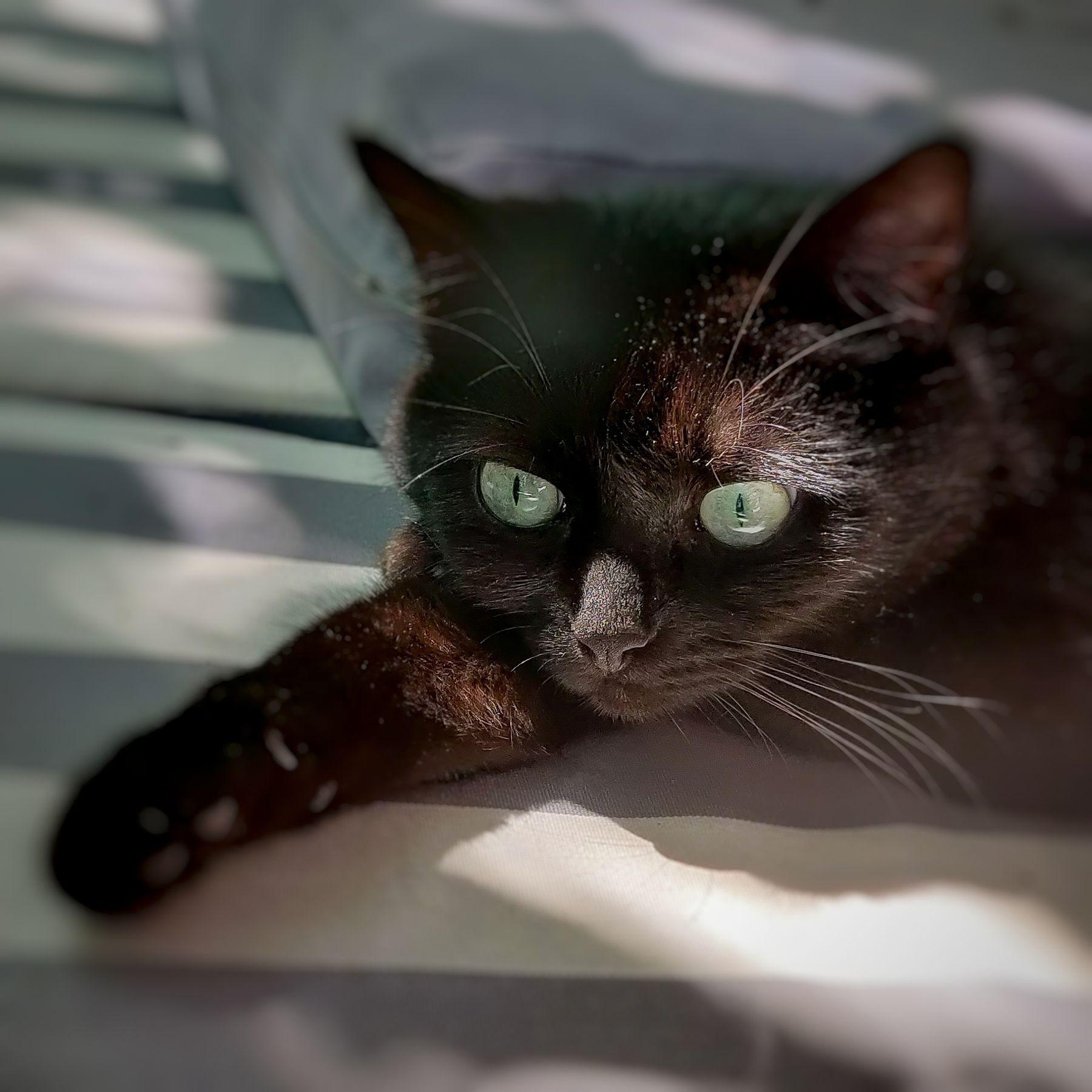 В мечтах о котлетах Кошки